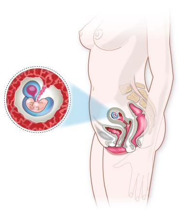 Embarazo mes a mes: Cambios en la embarazada y el bebé