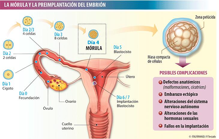 b2ba95891 Tóxicos y problemas del primer trimestre de embarazo