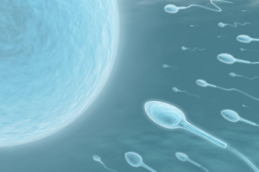 tiempo que tarda espermatozoide linear unit conseguir al ovulo