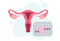 cuanto dura el ovulo vivo en la mujer